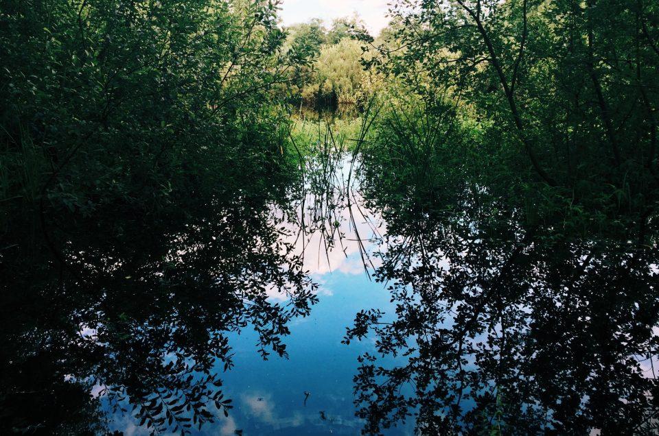 Das Eppendorfer Moor
