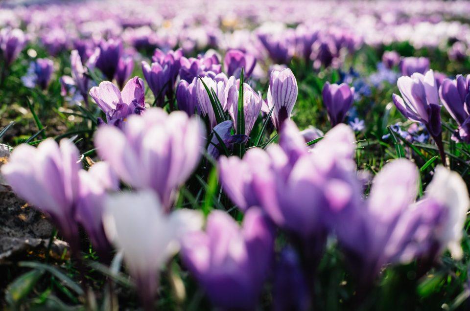 Blumen, Frühling, Closeup